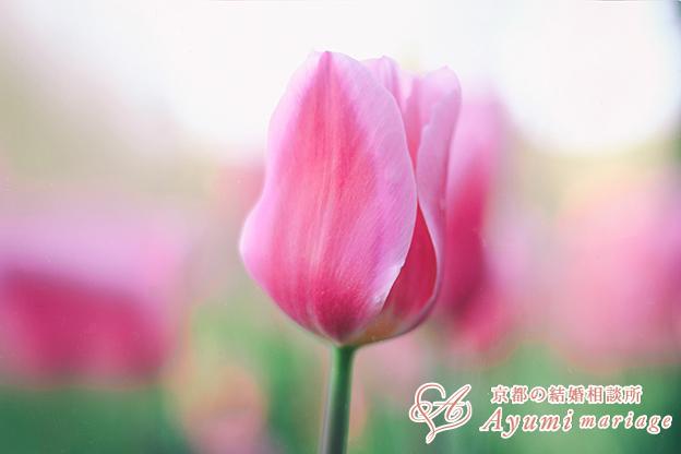 京都の結婚相談所あゆみマリアージュ_【男性必見】必要とされる人には共通の〇〇がある